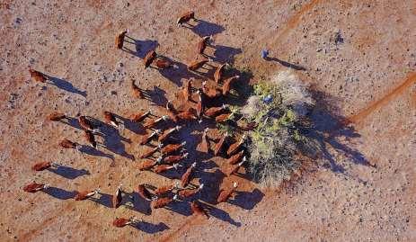 Trabalhadores cortam ramos de uma árvore para alimentar os animais.