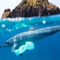 Estes sacos de plástico dissolvem-se na água