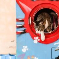 Máquinas de lavar roupa usadas são abrigos para gatos em Monchique