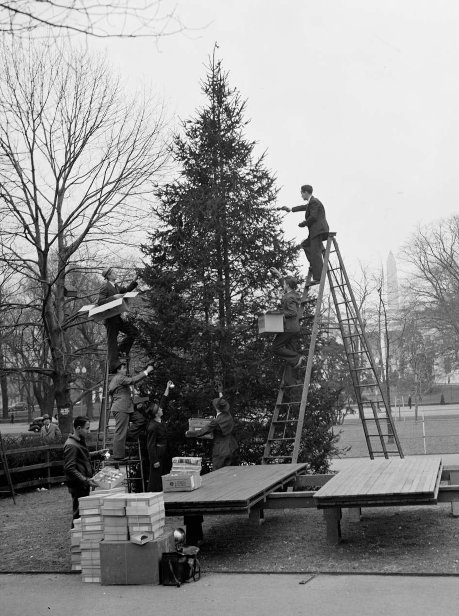 1937 - Trabalhadores preparam a árvore a norte da Casa Branca para ser iluminada pelo prosidente Roosevelt. Foto: Harris & Ewing/Library of Congress