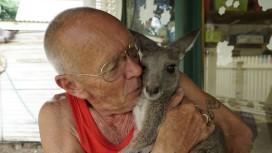 """Casal australiano torna a sua casa num santuário de cangurus, o """"Our Haven Wildlife Shelter"""". Nesta foto, Tony embala um dos seus cangurus resgatados, a 12 de janeiro de 2018. Foto: Alana Tompson / Barcroft Images / Barcroft Media via Getty Images"""