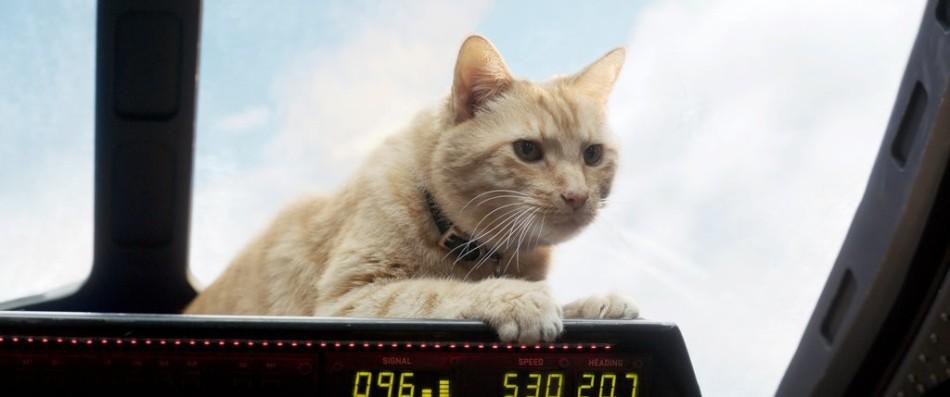 24marvel-cat2-jumbo-v2
